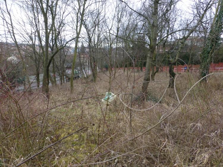 Revitalizace třešňového sadu nad Juliskou