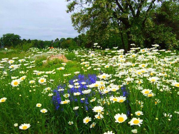Přírodní zahrada ČMELÍ KOUT v Šáreckém údolí